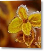 A Frosted Plant Metal Print