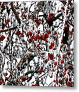 A Frosty Morning. Metal Print