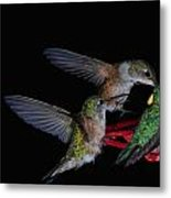 A Gathering At The Feeder Metal Print