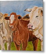 A Gathering Of Cows Metal Print