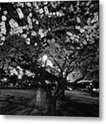 A Ghost In The Cherry Blossoms Metal Print