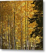 A Golden Trail Metal Print