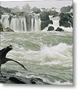 A Great Blue Heron Stretches Its Neck Metal Print