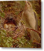 A Greenfinch At Its Nest Metal Print