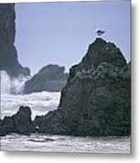 A Gull Sits On A Rock At Cannon Beach Metal Print