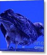A Hawk Looks Back  Metal Print