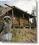 A Hawk Owl Sits On A Stump Near A Log Metal Print