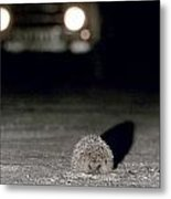 A Hedgehog Metal Print