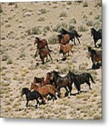 A Herd Of Wild Horses Gallops Metal Print