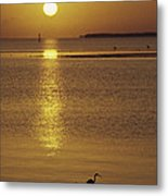 A Heron Wades In The Shallow Water Metal Print