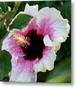A Hibiscus Of A Different Kind Metal Print