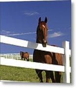 A Horse Peers Over A Fence Metal Print