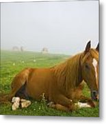 A Horse Sitting On The Grass In A Metal Print