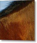 A Horses Neck And Mane, Seen So Close Metal Print