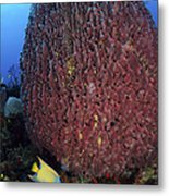 A Large Barrel Sponge With Queen Metal Print