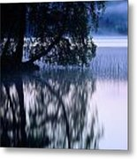 A Large Tree Grows At The Edge Metal Print