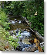 A Lazy Summer Day On Mt Spokane Metal Print