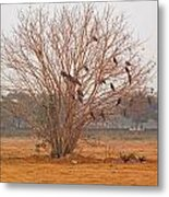 A Leafless Tree That Is Home To A Large Number Of Big Birds In The Middle Of A Ground Metal Print