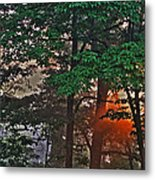 A Light In The Forest Metal Print