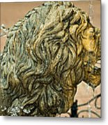 A Lion In Summer Metal Print
