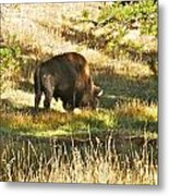 A Lone Bison In Yellowstone 9467 Metal Print