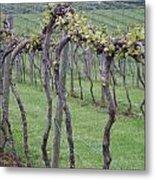 A Love Of Wine Metal Print