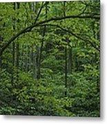 A Lush Green Eastern Woodland View.  An Metal Print