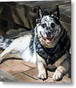 A Man's Best Friend Metal Print