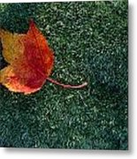A Maple Leaf Lies On Emerald Moss Metal Print