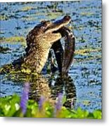 A Meal Fit For A Gator Metal Print