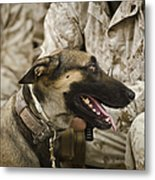 A Military Working Dog Sits At The Feet Metal Print by Stocktrek Images