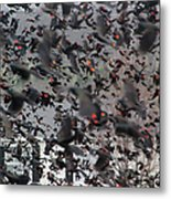 A Mob Of Red-winged Blackbirds Metal Print