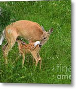 A Mother's Love - Doe And Fawn Metal Print