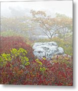 A Natural Garden At Dolly Sods Wilderness Area Metal Print