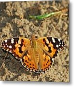 A Painted Lady Looking For Sex 8619 3369 Metal Print
