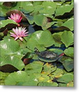 A Painted Turtle Rests On A Water Lily Metal Print