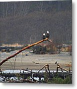A Pair Of Eagles In The Rain Metal Print