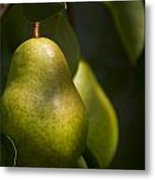 A Pair Of Pear On A Tree Metal Print