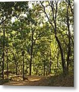 A Path Through A Sparse Forest And Trees Metal Print