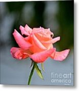 A Peachy Pink Delight Metal Print
