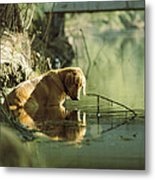 A Pet Dog Sits In The Shallow Water Metal Print