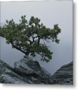 A Pine Tree Clings To A Rocky Ridge Metal Print