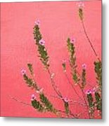 A Pink Flowering Plant Growing Beside A Metal Print by Stuart Westmorland