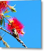 A Place To Perch Metal Print