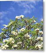 A Plumeria Caracasana Tree In Full Metal Print