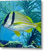 A Porkfish Swims By Sea Plumes Metal Print