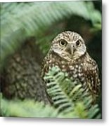 A Portrait Of A Captive Burrowing Owl Metal Print