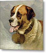 A Portrait Of A St. Bernard Metal Print
