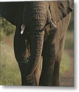 A Portrait Of An African Elephant Metal Print