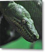 A Real Reptile Metal Print